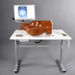 Heart valve surgical training model